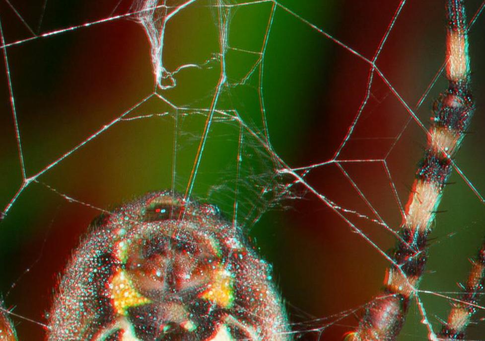 Spinnfaden