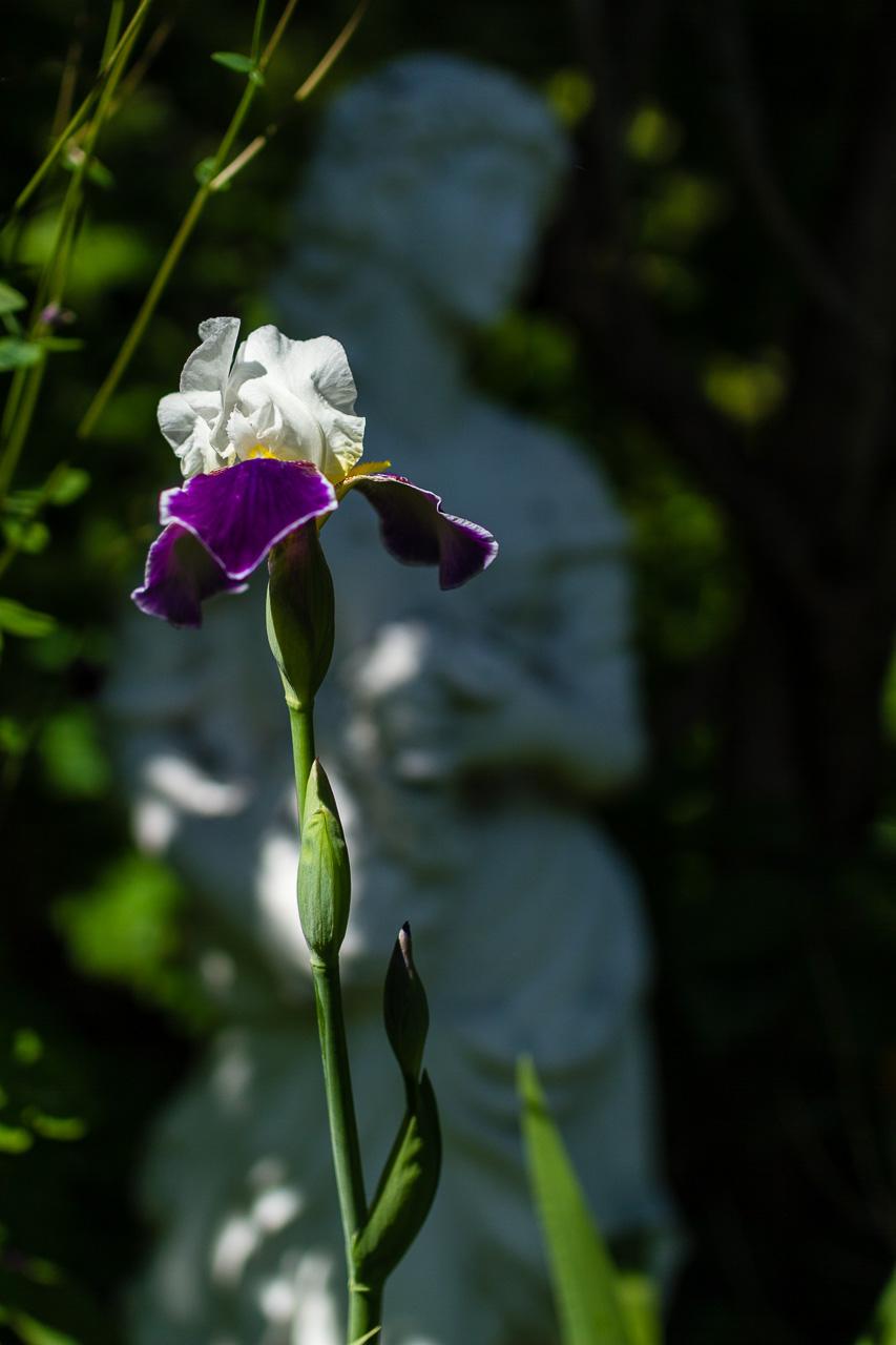 Blütenzaubergarten