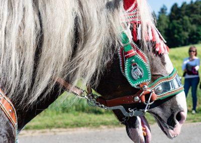 betendes Pferd